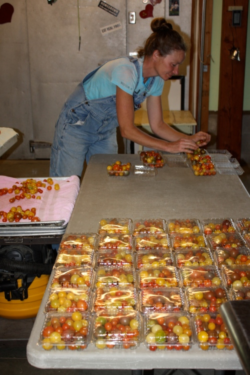Packing the Cherry tomato shares.