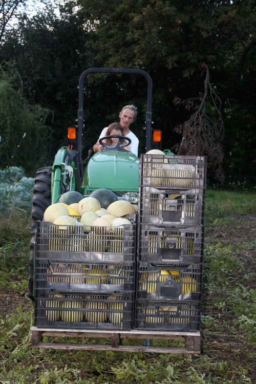 Scott hauling up the last melon harvest at dark.