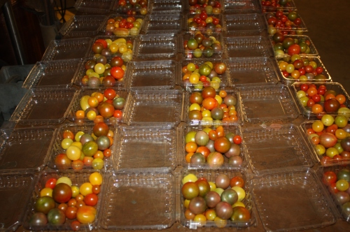 Packing the Cherry Tomatoes for the shares.
