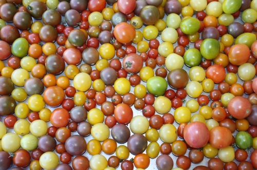 This week's cherry tomato harvest ready to be washed.