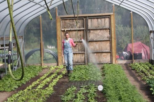 Daily Hoop house watering.