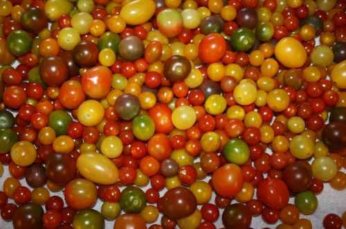 Pretty Cherry Tomatoes.....