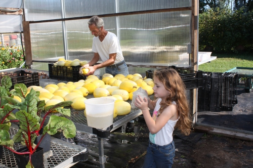 Scott and Maeve washing the spaghetti squash before we put them in the shares.