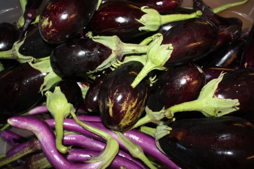 Morning pick of Eggplant.
