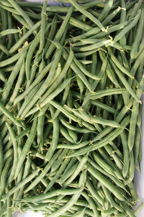 Green beans chilled and ready to be bagged.