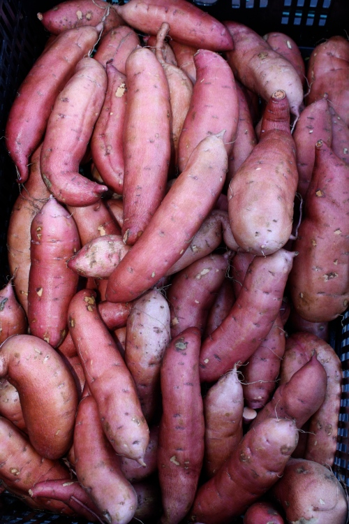 Pretty sweet potatoes after washing.