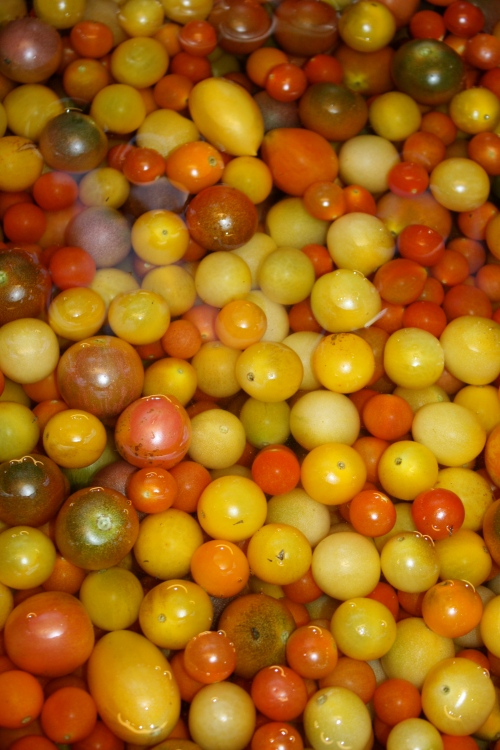 Cherry Tomatoes in October.