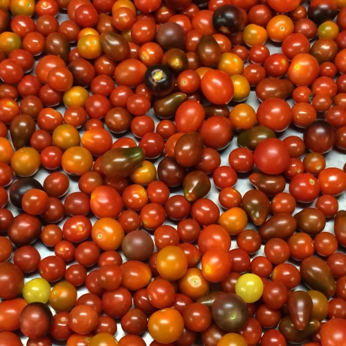 Beautiful Cherry Tomatoes.
