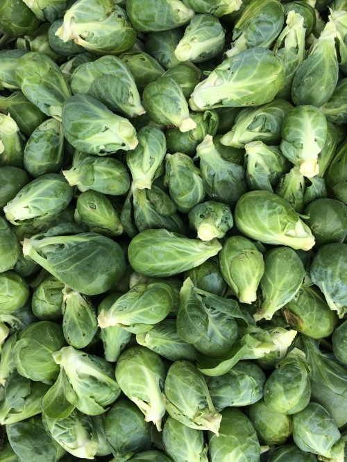 Just picked Brussels Sprouts.